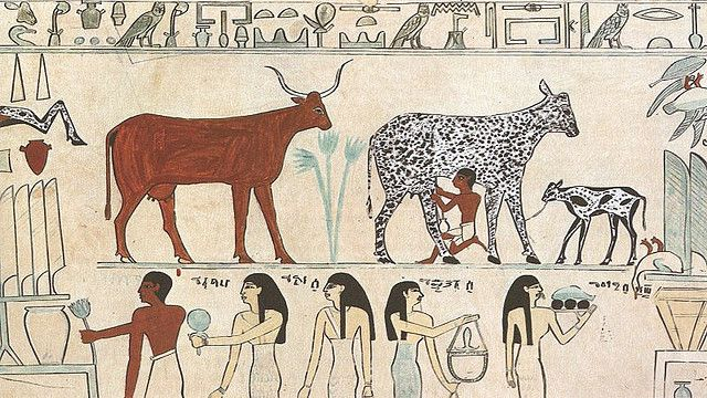 Domestication, alongside agriculture, is at the origin of human civilisation. © Believe Collective CC by 2.0