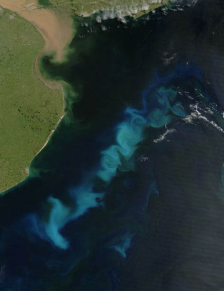 Phytoplankton can be seen by satellite as shown in this photo of the Argentinean coast taken by NASA's Aqua satellite with the MODIS spectroradiometer (Moderate Resolution Imaging Spectroradiometer). Credits: DR.