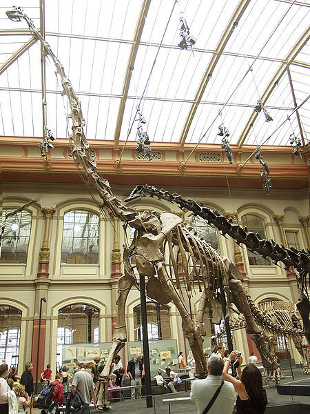 Composite skeleton of a Giraffatitan, one of the largest organisms to ever have roamed the earth. © Raimond Spekking, Wikimedia Commons CC by-sa 3.0 & GFDL