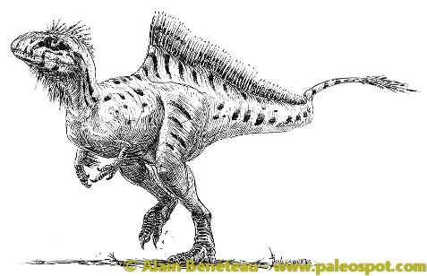Suggested reconstruction of the Concavenator. © Alain Bénéteau