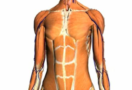 The muscles of a cadaver stiffen rapidly and become rigid.  © Google/Noobformua, Youtube.