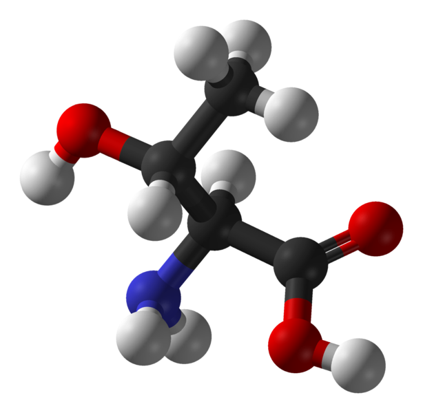 Threonine is an essential amino acid. © Ben Mills, Wikimedia, public domain