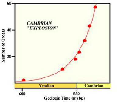 The Cambrian explosion is aptly named if we look at this graph showing the rise in the number of orders of living species that  appeared at that time.