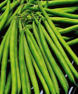 French filet beans are one of the varieties of green beans. © DR