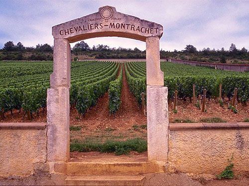 Montrachet produces white wines that accompany fine dishes. © DR