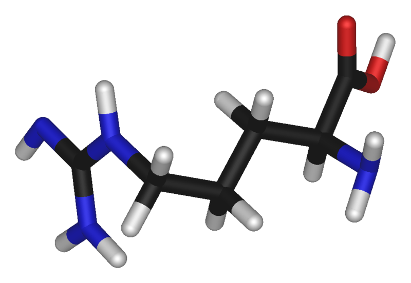 Arginine is a basic amino acid (carbon atom in black, oxygen in red, nitrogen in blue, hydrogen in white).  © Photohound, public domain