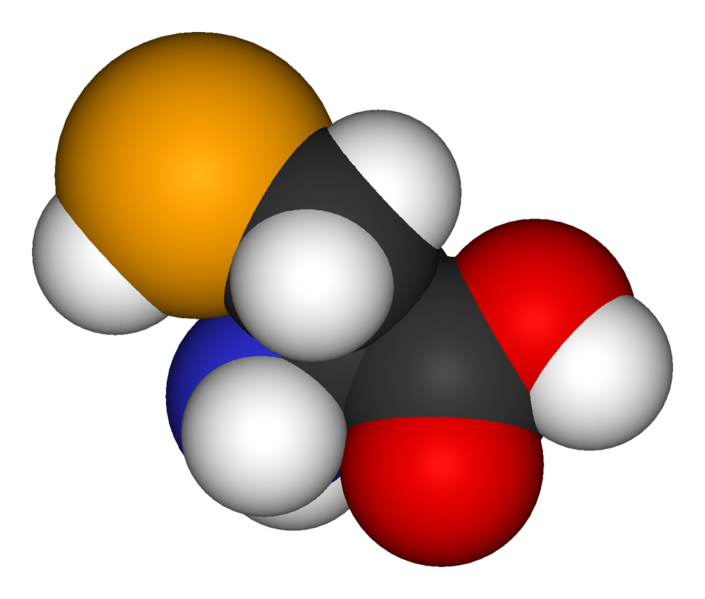 Selenocysteine is a rare amino acid which incorporates at a stop codon. © Public domain