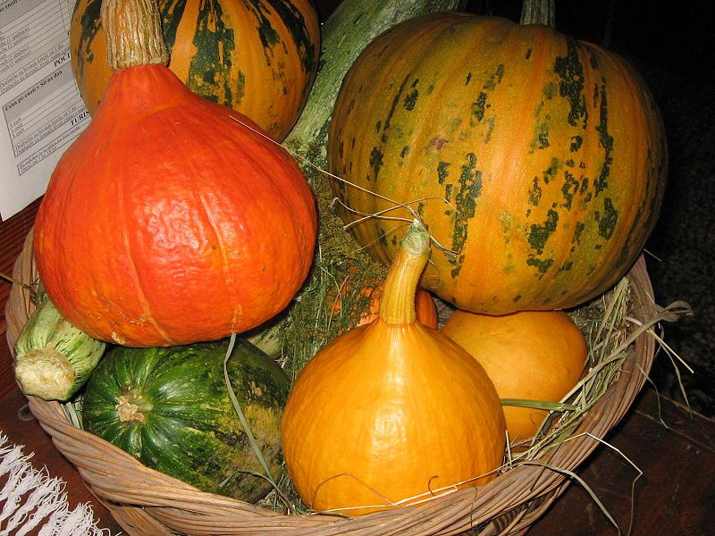 There are many shapes and colours of winter squash, which can also be used for decoration. © Janez Novak/Licence Creative Commons