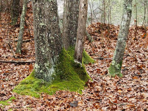 Dead leaf litter in a forest. © Takomabibelot CC by