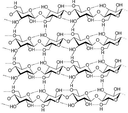 A macromolecule of cellulose, a holoside. © Luca Laghi, Wikimedia CC by-sa 3.0