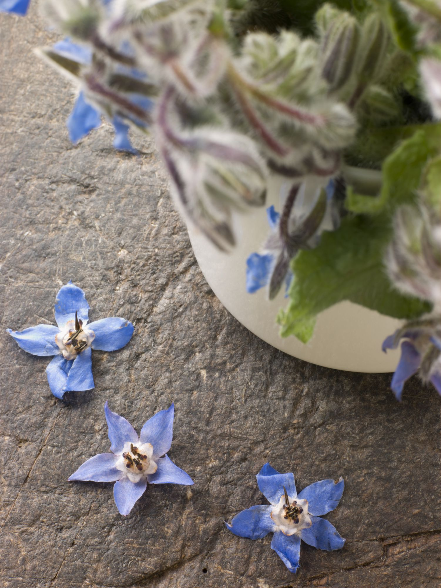 "Borage: ""the father of sweat"". © Phovoir"