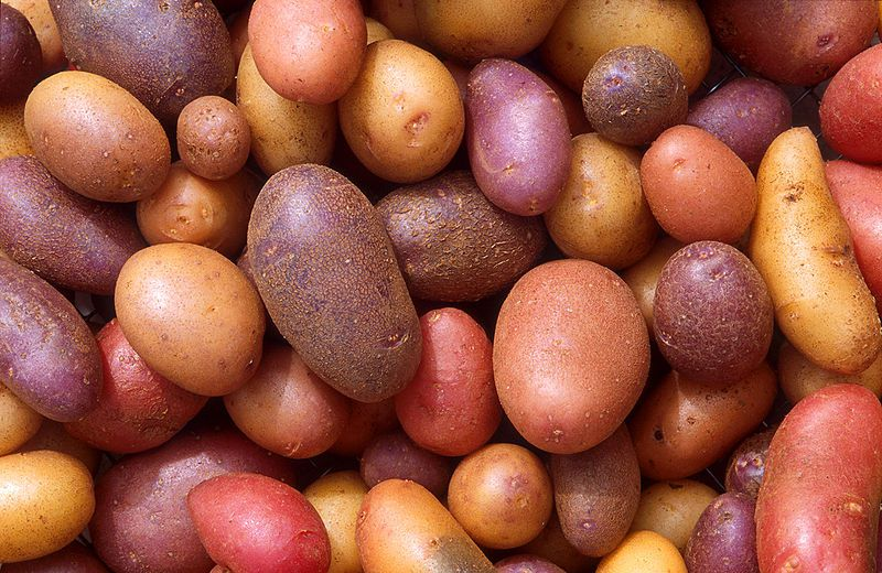 There are many varieties of potatoes. © DR