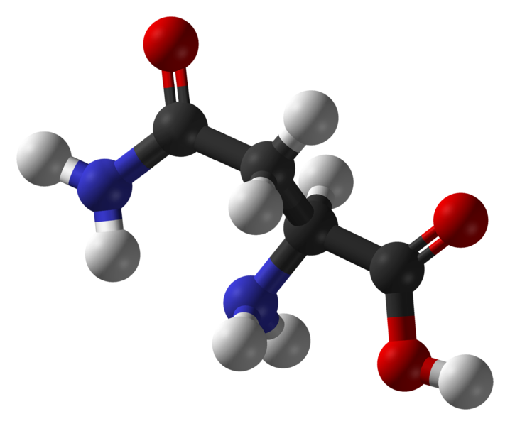 Asparagine is a polar amino acid (carbon in black, oxygen in red, nitrogen in blue and hydrogen in white).  © Ben Mills, public domain
