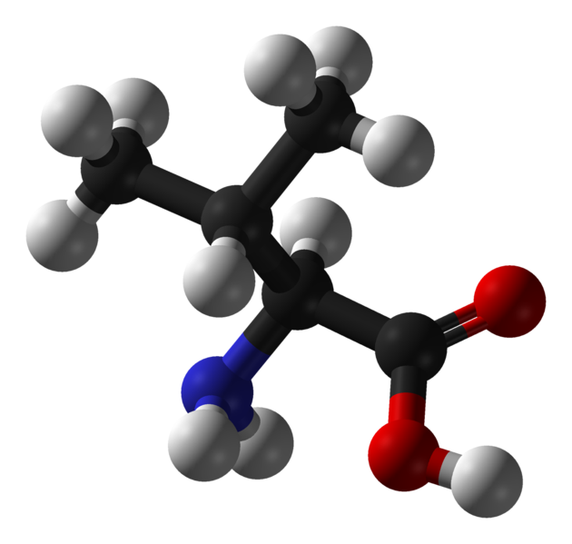 Valine is an essential amino acid.  © Benjah-bmm27, Wikimedia, public domain