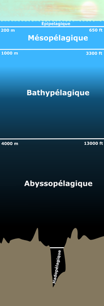 The aphotic zone corresponds to the zones located under the epipelagic zone. Depending on the definition, the mesopelagic zone may or may not be included in the aphotic zone. © Finlay McWalter, Wikimedia public domain