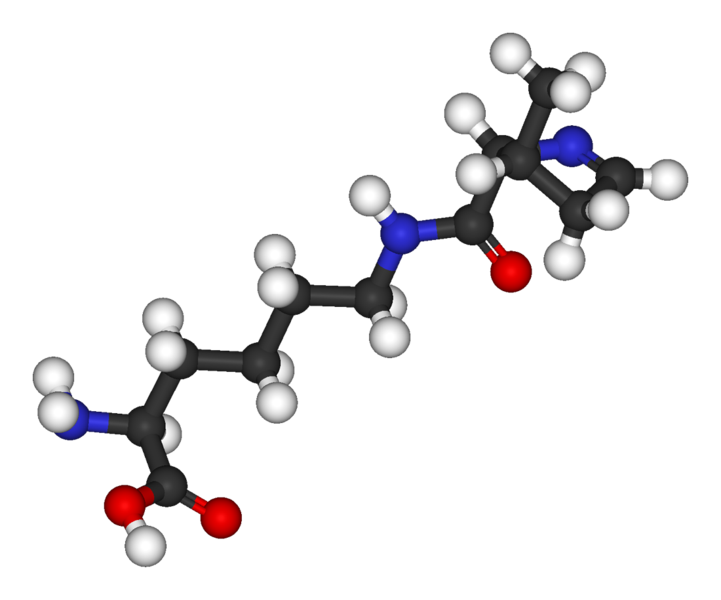 Pyrrolysine is a rare amino acid which is incorporated opposite a stop codon © Public domain
