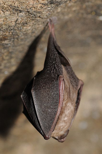Bats use echolocation to navigate. © Jan Svetlík, Flickr, cc by nc nd 2.0