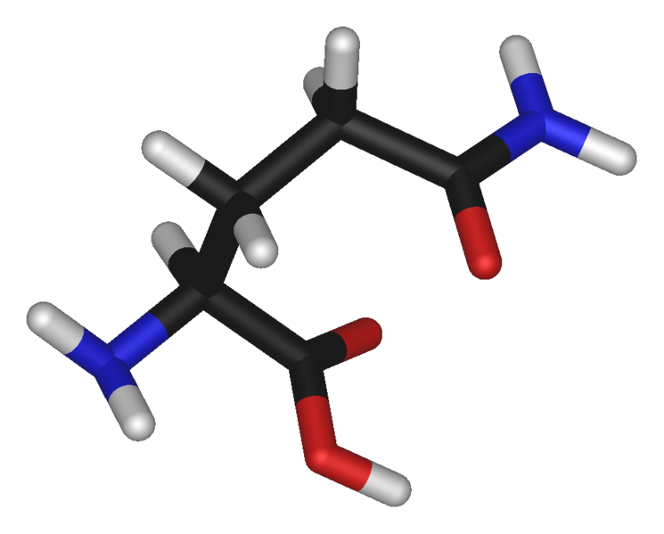 Glutamine is an amino acid (carbon atom in black, oxygen in red, nitrogen in blue, and hydrogen in white). © public domain