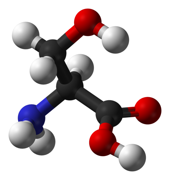 Serine is found in the active sites of many enzymes.  © Ben Mills, Wikimedia, public domain