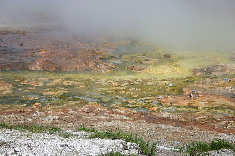 Archaea