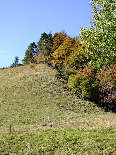 This boundary area between a meadow and a forest houses species from the meadow that prefer darker and cooler environments and species from the forest that prefer light and warmth. © Inoteb CC by-nc-nd 2.0