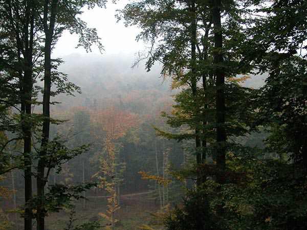 A mixed temperate forest in the Northern Vosges Natural Park. © Pierre Kessler CC by-nc-sa 2.0