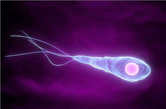 The Nicolaier bacillus causes tetanus. © DR
