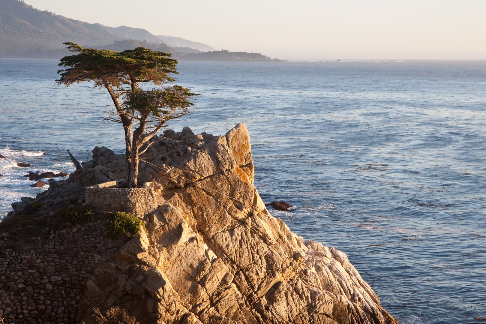 The Monterey cypress. © Christian Mehlfuhrer, Flickr by nc-sa 3.0