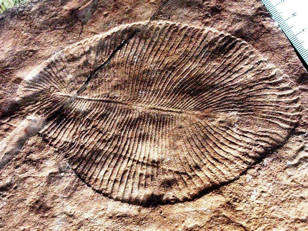Proterozoic era