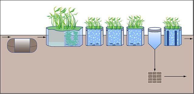 Diagram of a phytoremediation treatment system for used water. © MIT OpenCourseWare CC by-nc-sa 2.0