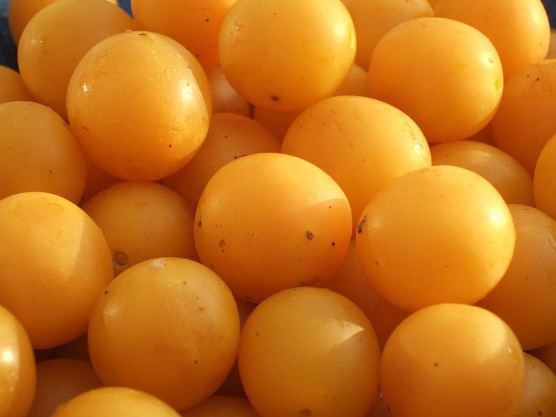Mirabelle plums are sweet summer fruit that are full of vitamins. © DR, Wikimedia, CC by-sa 3.0