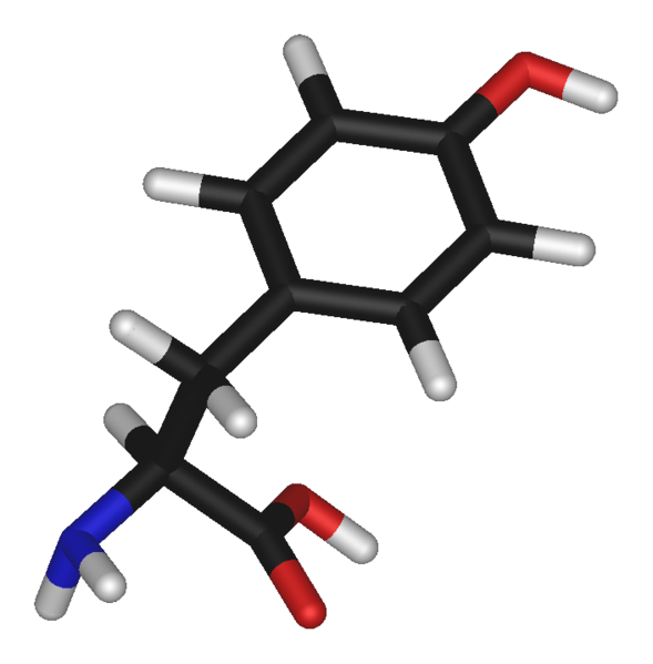 Tyrosine is a non-essential amino acid. © Public domain