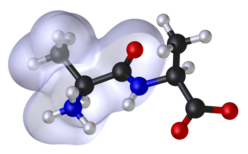 On the left the grey envelope shows the lipophilic (hydrophobic) region of the molecule. © Dhatfield et Edboas, Wikimedia CC by-sa 3.0