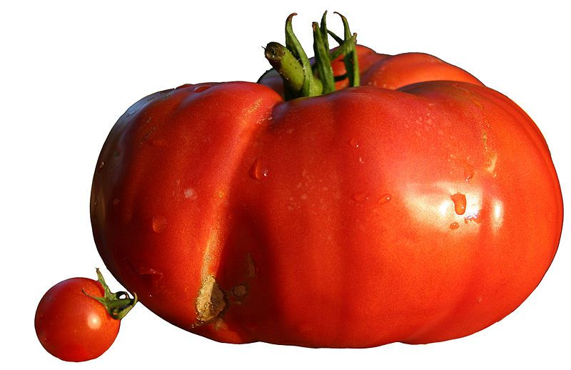 Tomato varieties range from the small cherry tomato to the large beefsteak tomato. © Wikimedia Commons