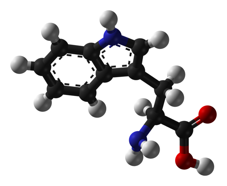 Tryptophan is an essential amino acid. © Benjah-bmm27, Wikimedia, public domain