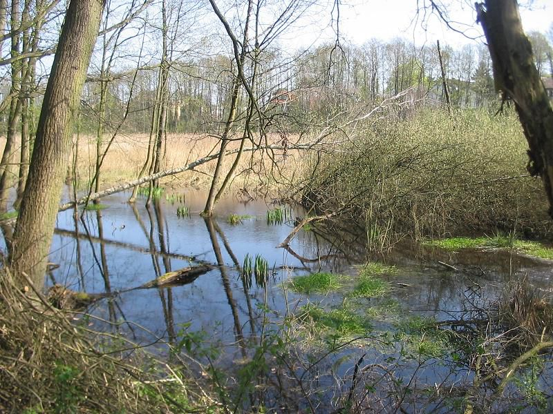The Fließwiese Ruhleben nature reserve in Germany is part of the Natura 2000 network and therefore the pan-European ecological network implemented under the Berne Convention. © Lienhard Schulz, Wikimédia CC by-sa-3.0