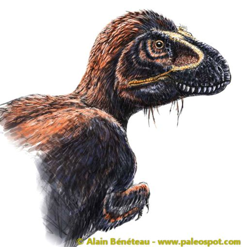 Artist's impression of a feathered Tyrannosaurus. © Alain Bénéteau
