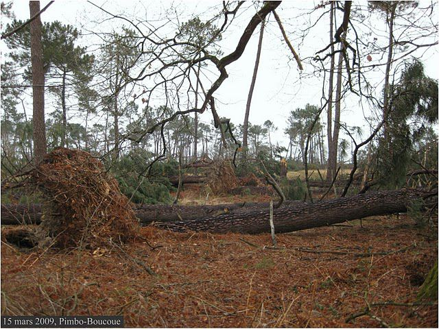 A windthrow in the Landes region after Cyclone Klaus. © François B. CC by-nc-nd 3.0