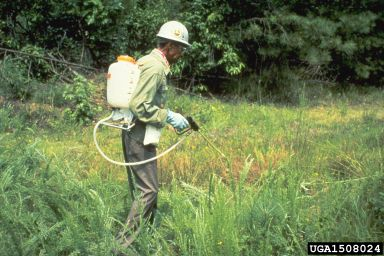 A technician spraying a phytotoxic product. © USDA Forest Service - Region 8 Archive, USDA Forest Service, Bugwood.org CC by 3.0