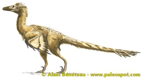 Reconstruction of a velociraptor. The colours of its plumage are hypothetical. © Alain Bénéteau