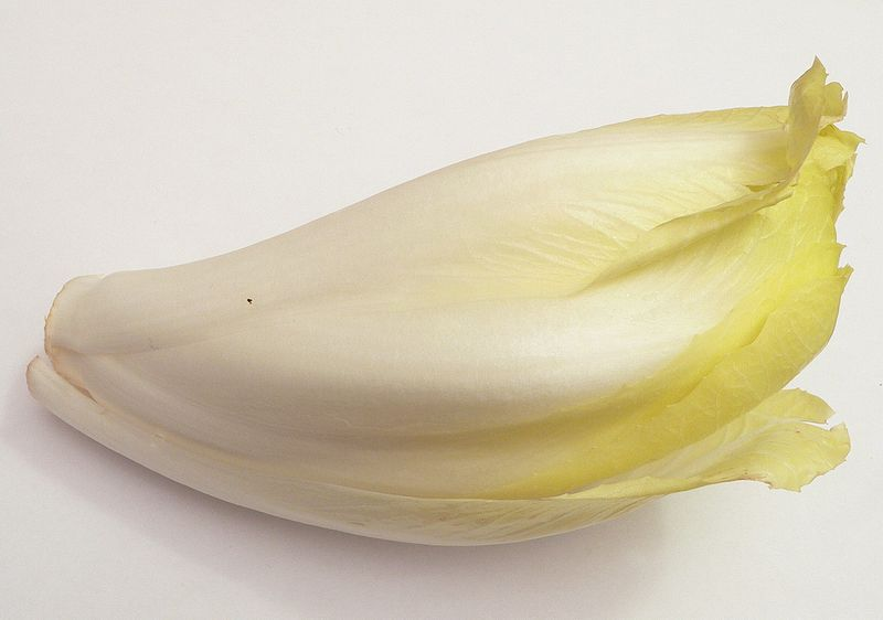 The endive is a vegetable with a slightly bitter taste. © Wikimedia Commons