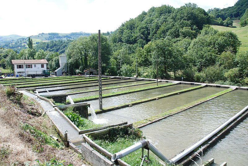 Fish farming ponds in a fresh water fish farm. © Harrieta171, Wikimedia CC by-sa 3.0