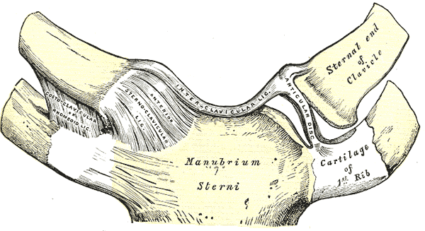 The sterno-clavicular joint and the insertion of the first rib. © DR