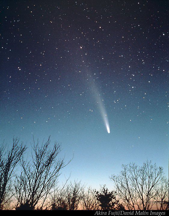 Bennett's comet in the spring of 1970. Credit A. Fujii/D. Malin Images