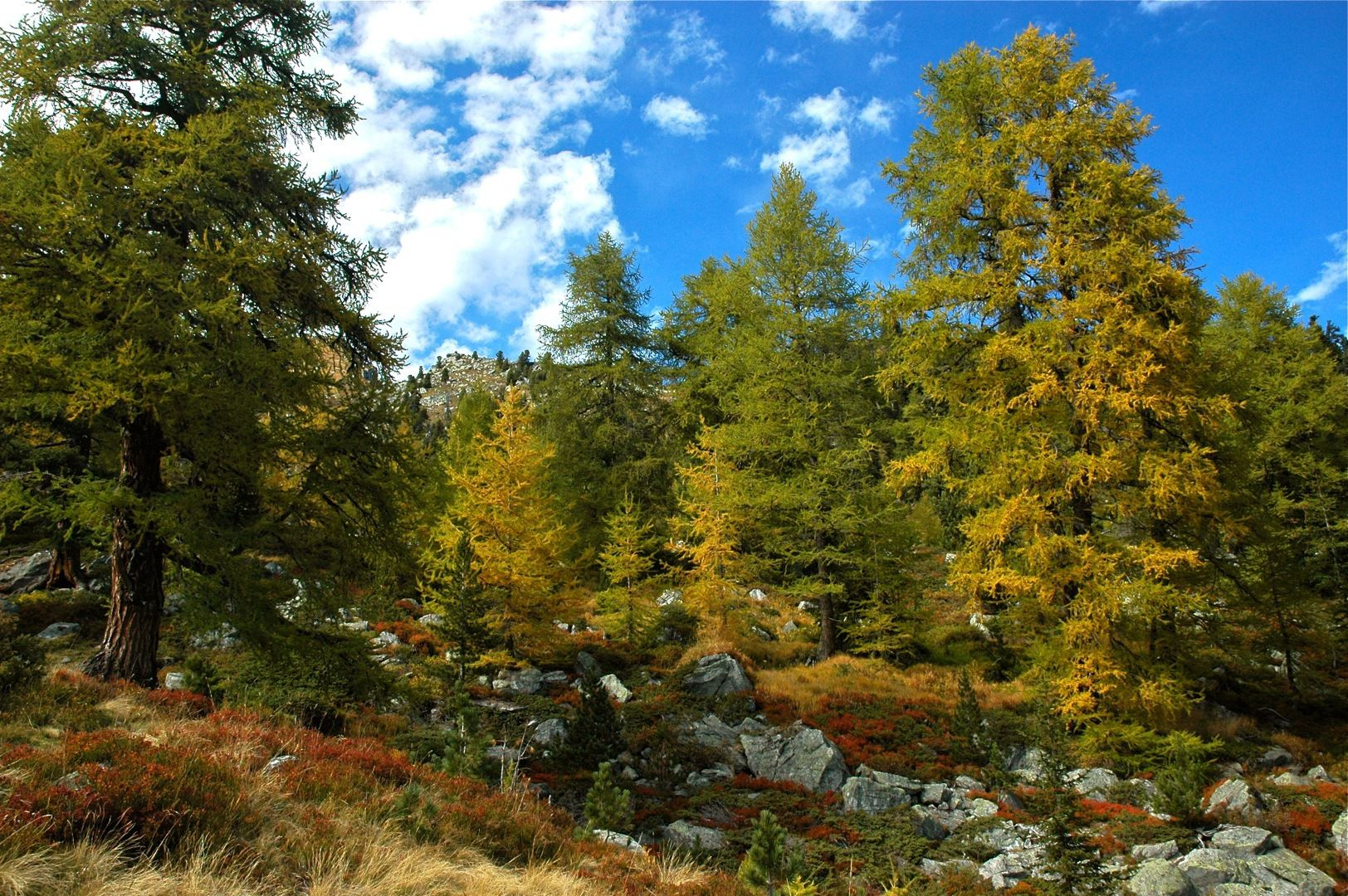 The European larch. © Les jardiniers du possible, Flickr CC