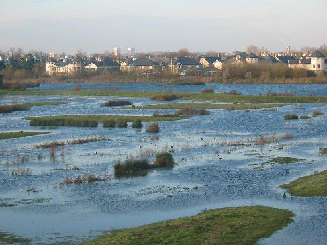 Wet meadows, such as this meadow flooded by the Thames near London, are becoming increasingly rare despite their ecological importance and their role in flood prevention. © Ian Day, Geograph CC by-sa 2.0