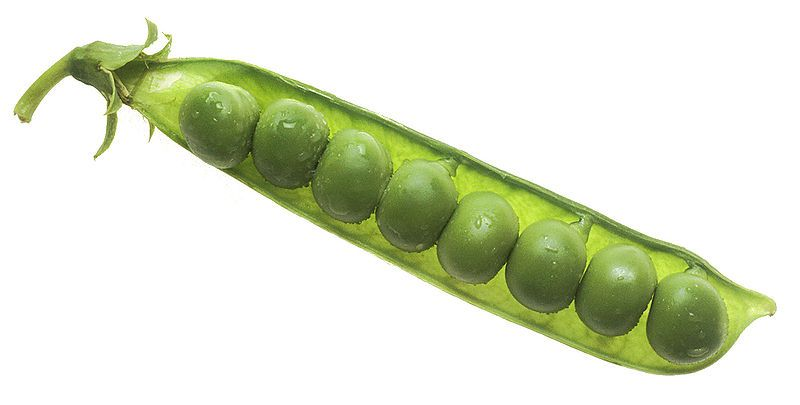 Peas are a source of vegetable protein. © DR