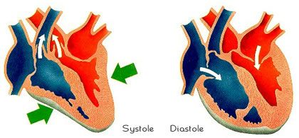 Systole is the contraction stage of the heart. DR Credits