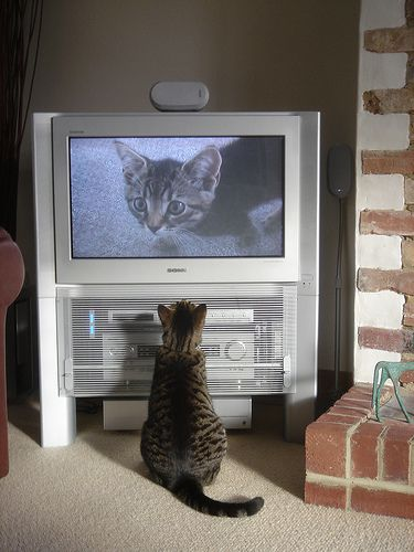 This cat can only look at its own image on the TV if there is electricity. © Cloudzilla CC by 2.0
