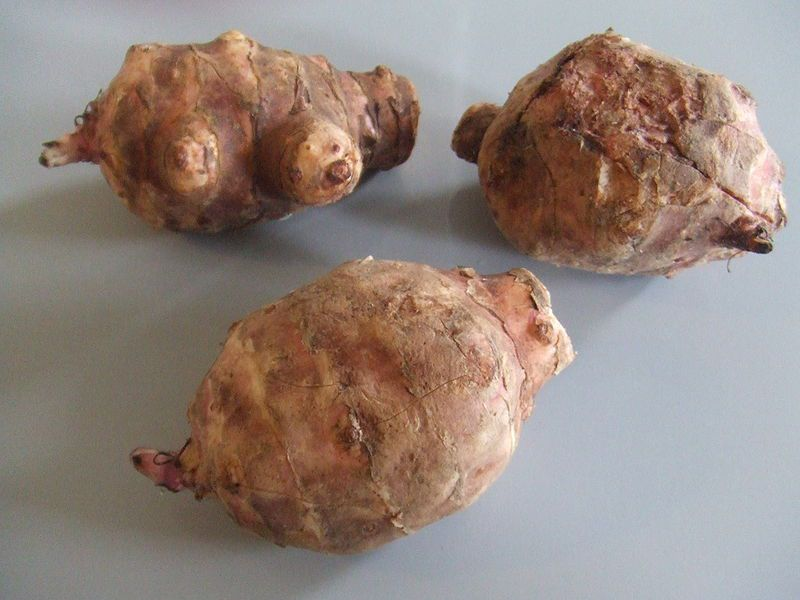 The Jerusalem artichoke is a tuber vegetable. © DR
